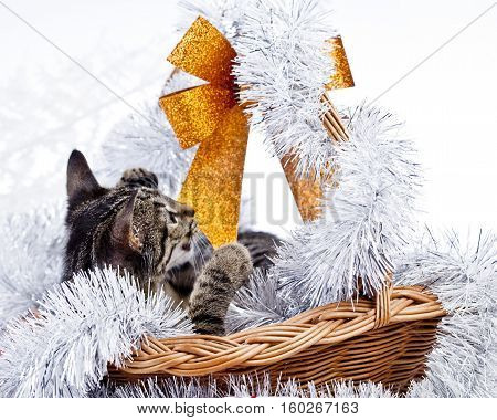 christmas cat with a christmas basket and gifts