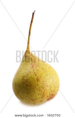 Wild Pear
