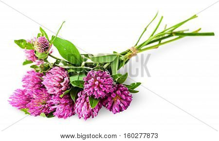 Bouquet of clover tied with rope isolated on white background