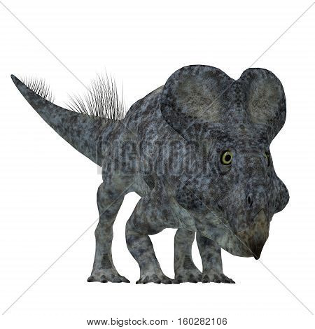 Protoceratops Dinosaur on White 3D Illustration - Protoceratops was a herbivorous Ceratopsian dinosaur that lived in Mongolia in the Cretaceous Period.