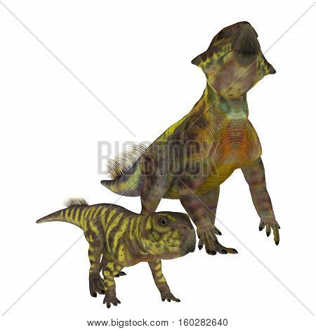 Psittacosaurus Dinosaurs on White 3D Illustration - Psittacosaurus was a Ceratopsian herbivorous dinosaur that lived in Asia in the Cretaceous Period.