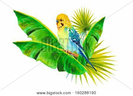 watercolor picture of budgie on a white background