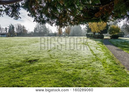 Grass glistens with morning dew at a city park.