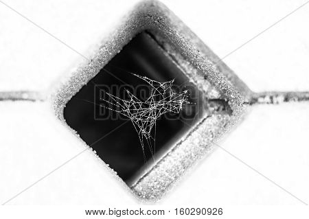 black and white photo of little spider web covered with dew inside concrete grid paver