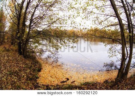 Trees in the autumn forest. Fall woods. Rich colors.fisheye lens