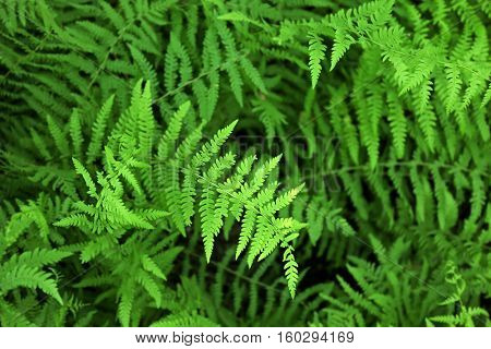 Green bush close up