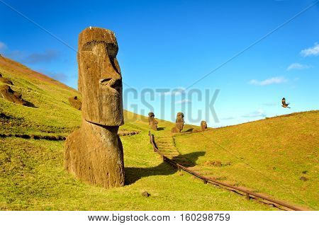 The Moai of the hills of Easter Island Chile are joined in their solitude by a flying hawk