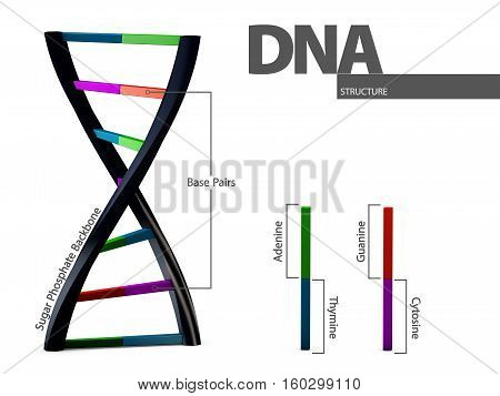 3d Illustration chemical structure of DNA on white background