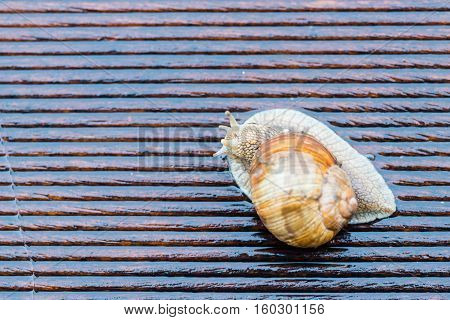 Snail On The Wet Terrace