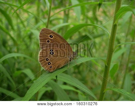 macro photo of beautiful butterfly with velvety wings on the background of fresh green grass