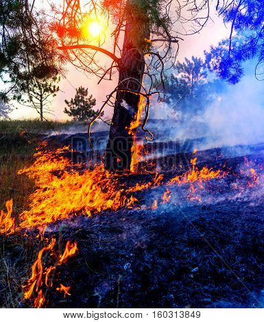 Forest fire. fallen tree is burned to the ground a lot of smoke when vildfire.