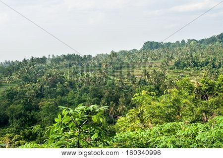 View Of The Rice Terraces Boracay Philippines