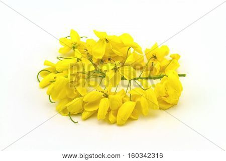 Flowers of Cassia fistula or Golden shower national tree of Thailand on white background