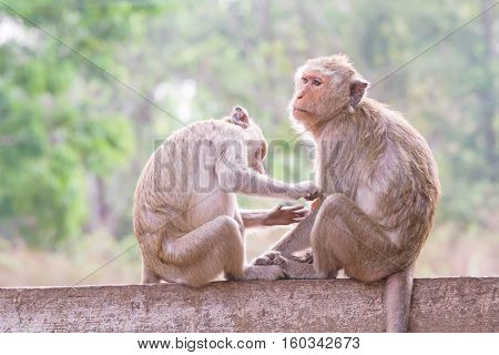 Monkeys checking for fleas and ticks in the park