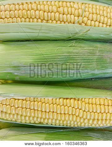 isolated fresh corn closeup as natural background