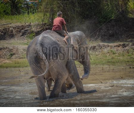 elephant mother and baby playing mud .
