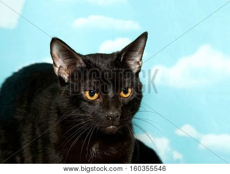 Portrait of a Black cat with vibrant yellow eyes looking to viewers right. Blue background sky with clouds. Copy space.