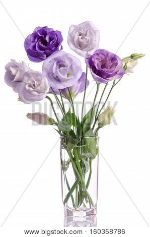 Bunch Of White And Violet Eustoma Flowers In Glass Vase