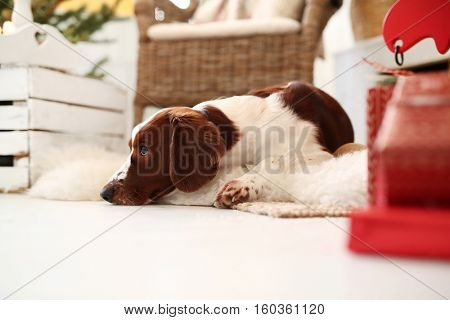 Lovely dog lying on the carpet