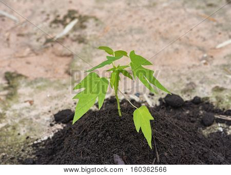 Hydroponic vegetable is planted in a garden,Fresh organic vegetable in hydroponic vegetable field.