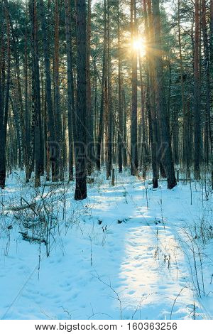 Landscape with the image of winter forest