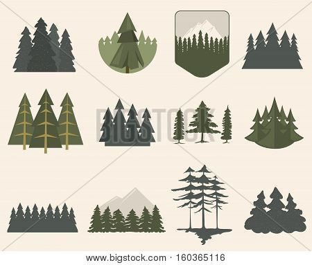 Illustration with fir trees set isolated. Pine plant wood branch natural landscape element. Trunk environment deciduous abstract vector. Big forest growth seasonal object.