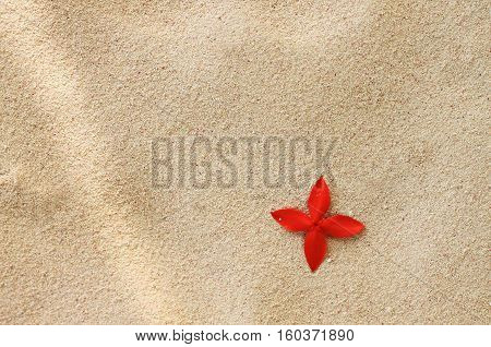 Single bright red tropical flower Ixora on beige sunlit seaside sand. Spa beach resort relaxation background.