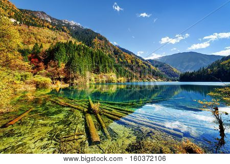 Amazing View Of The Arrow Bamboo Lake With Crystal Clear Water