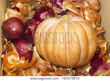 Small pumpkin among a different onion and onion peel in cardboard box