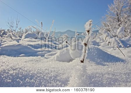 Winter landscape - trees and branches covered with snow