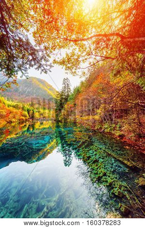 The Five Flower Lake Among Fall Woods, Jiuzhaigou Nature Reserve