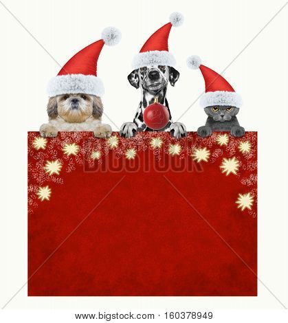 christmas time with animals -- isolated on white