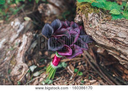 Wedding Bouquet Of  Calla. Bouquet Of Purple Flowers. Beautiful Wedding Bouquet On The Green Grass