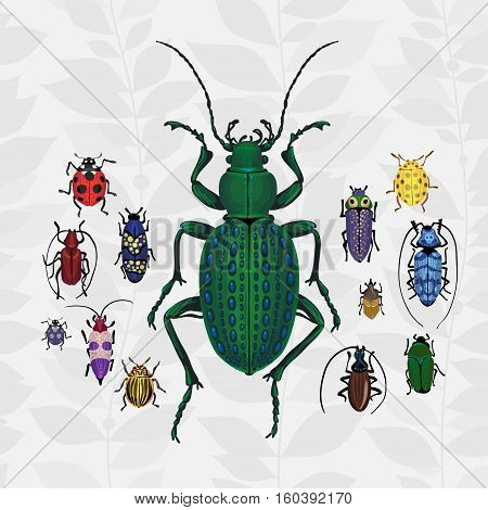 Bright Vector Set With Colorful Bugs.