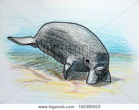 Illustration of a close up sea cow. Colour pencils cartoon manatee