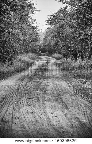 The Arduous journey of the countryside , black and white