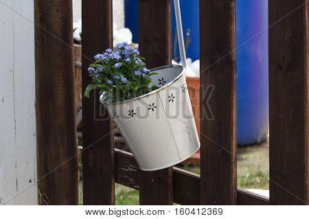 Balcony Plants / Blue flowers in decorative pails