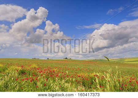 SPRINGTIME. Between Apulia and Basilicata.Hilly landscape with  cereal field  dominated by clouds. ITALY. In the background a farm.