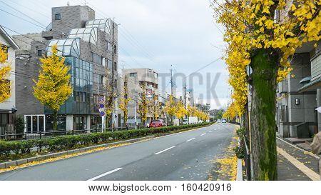 autumn in Japan Season change in Japan Ginkgo biloba on the way in Japan