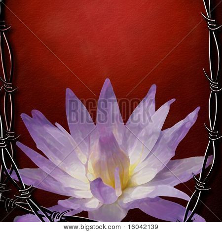 Contrast of Hard and sharp Barbed wire and soft and vulnerable lotus flower