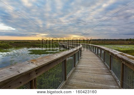 Boardwalk Through A Wetland - Gainesville, Florida