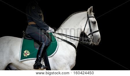 Rider on white dressage horse on black background