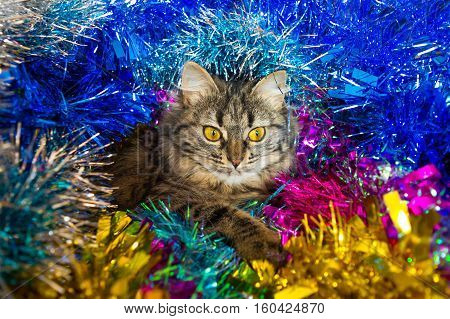 Imposingly Sprawling Christmas Cat.