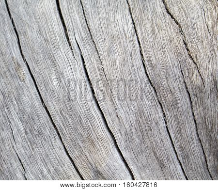 Wood texture closeup photo. White timber board with weathered crack lines. Natural background for shabby chic design. Silver wooden table image. Old tree trunk without bark.