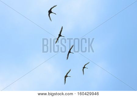 Flying birds on the blue sky background