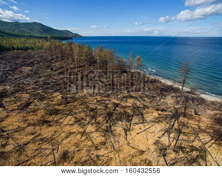 drone view of a burned forest near lake Baikal in Russia