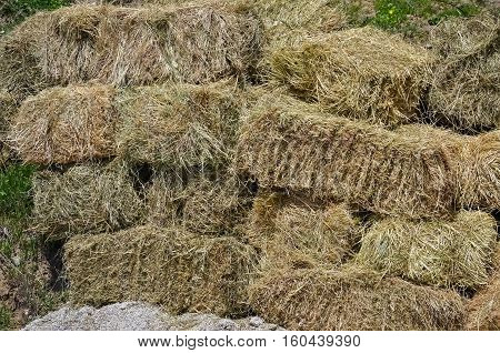 Closeup of many rolled bales of dry hay in the village