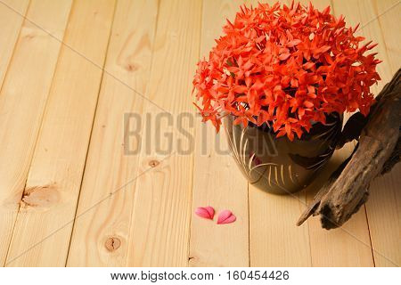 The red ixora in a flowerpot and old wood.