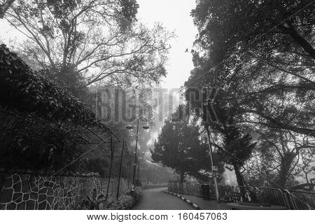 Foggy misty road indicating haunted in black and white