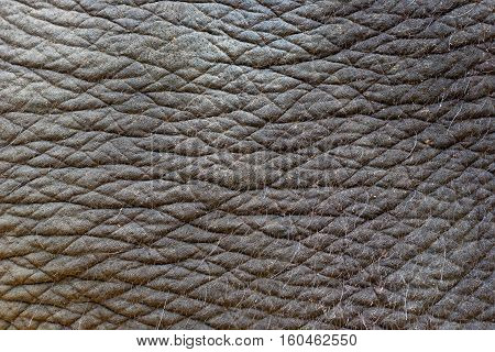 Elephant skin texture abstract background. Indian elephant skin